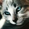 Котёнок YouTube