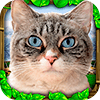 Скачать Stray Cat Simulator на андроид