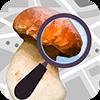 Mushroom Identificator (признать гриб)