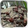Скачать Ant Simulation 3D - Insect Survival Game на андроид