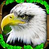 Eagle Simulator™
