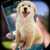 Собака на скриншоте - iDog