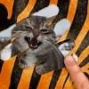 Скачать Угадай животное - животные по картинкам на андроид бесплатно